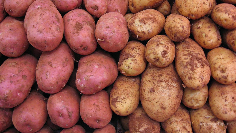 картофеля будут отмечать в Таджикистане 1