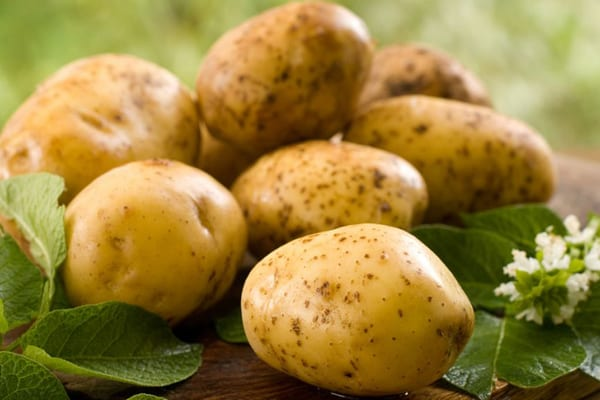 Potato growers association republic of moldova