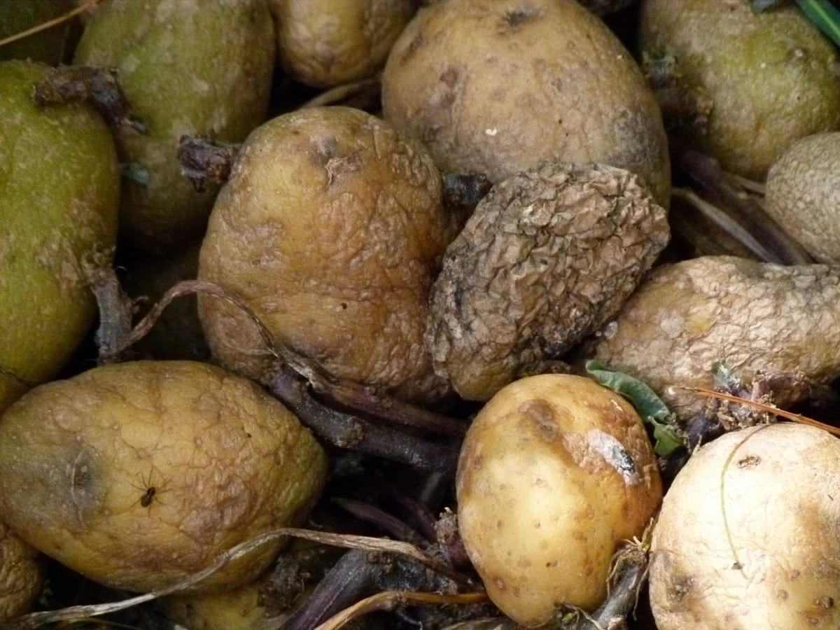 plant old food produce vegetable decay 1119134