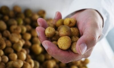 McDonalds and McCain offer climate resilience funding for potato farmers