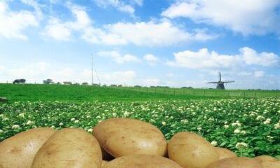 North Western European Potato Growers NEPG
