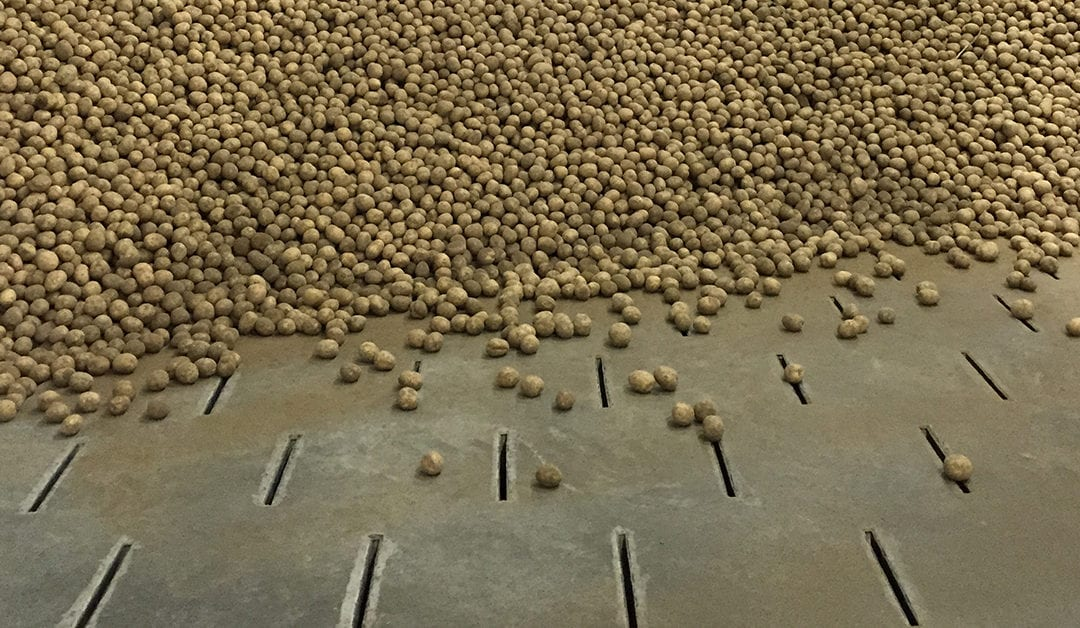 PROBLEM POTATOES AT HARVEST