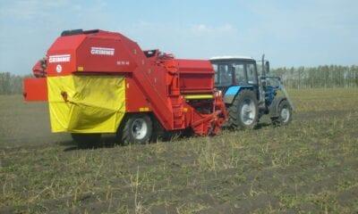 Potato harvesting continues in the Tambov region