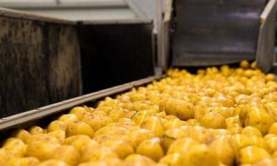 Potato processing and export pluses light