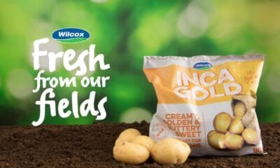 Wilcox Fresh potato