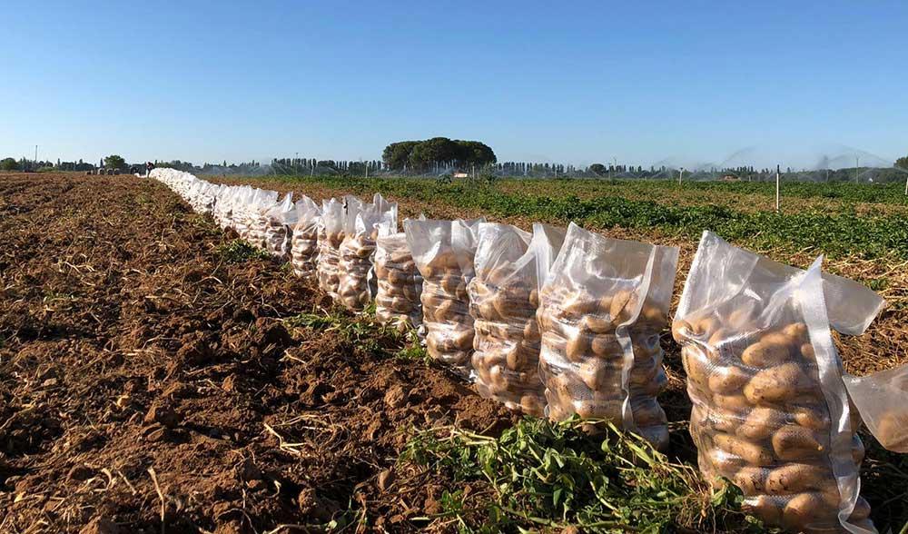 patatas julio hermanos busto criado 023
