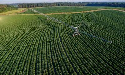 potatoes irrigation