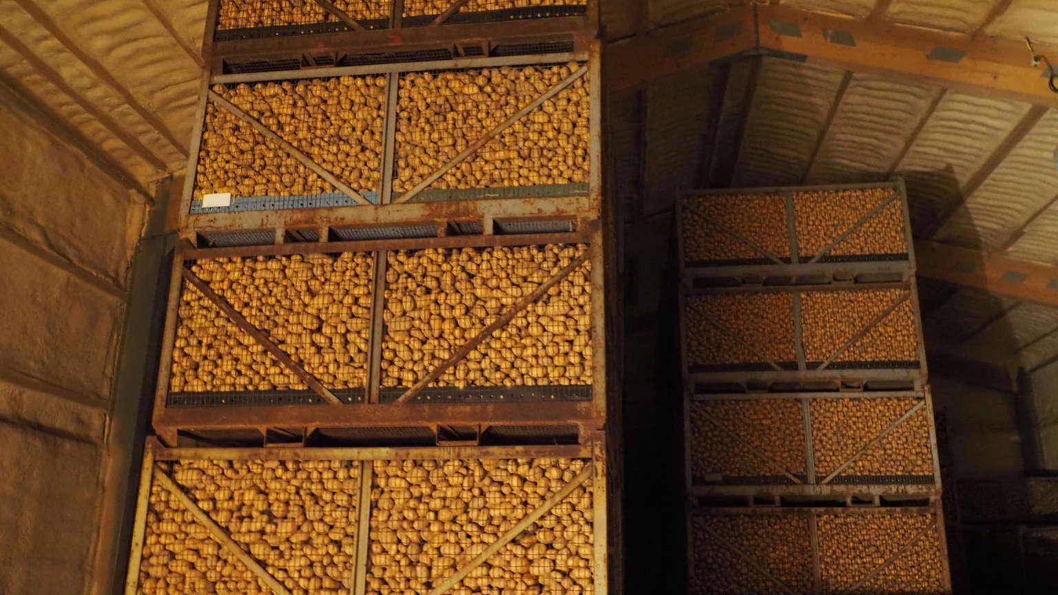 Picture of: Bedste Praksis For Opbevaring Af Kartofler Fra University Of Idaho Forskere Potatoes News