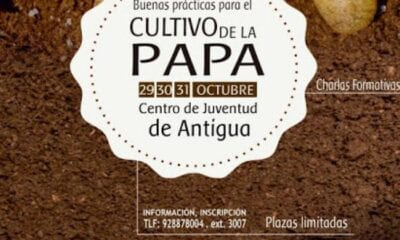 Spain (Fuerteventura): Antigua organizes a Good Practice Course for potato cultivation