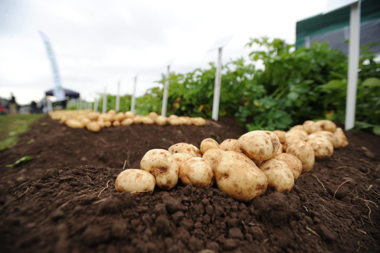 GMO scaled