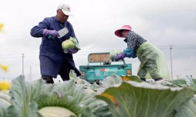 How China's digital farmers can grow a post-COVID-19 future