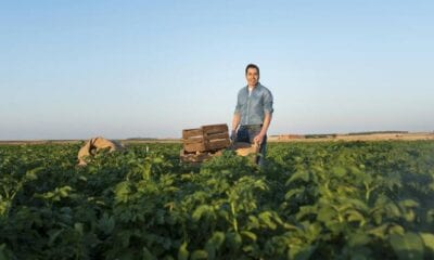 """The real key is to treat potato carefully, as if it were a fruit"" JAVIER MELENDEZ. From a childhood in the countryside to running the first national potato operator, Potatoes Meléndez"