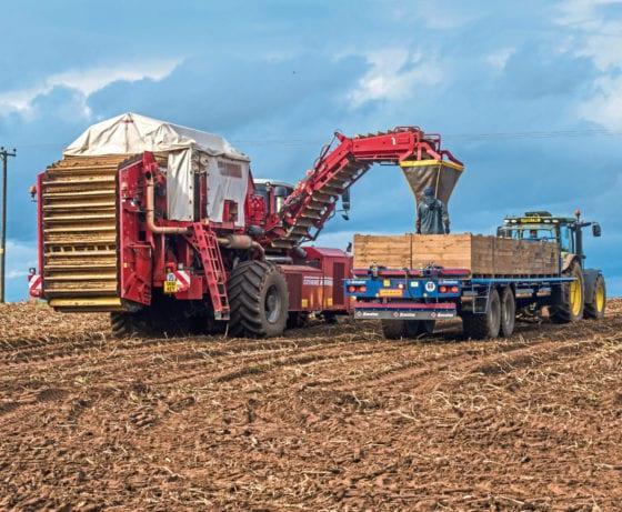 Mud brings potato harvest drudgery