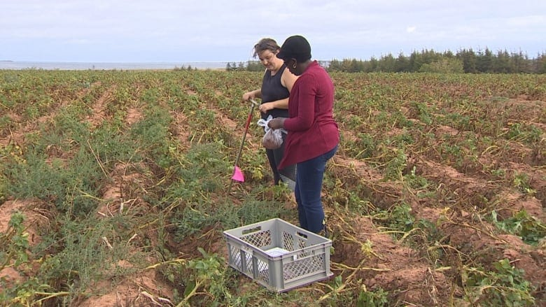Judith Nyiraneza, living lab co-lead scientist, says her colleagues at Agriculture Canada are interested in watching the living lab model and the results the work is producing. (Rick Gibbs/CBC)
