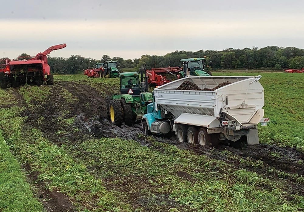 Potato producers have been spared sights like this in 2020, although yields may have fallen short of what many producers would have liked. Photo: John Sheldon Wiebe