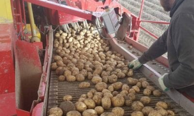 Potatoes in the age of shifting markets Annat Farms