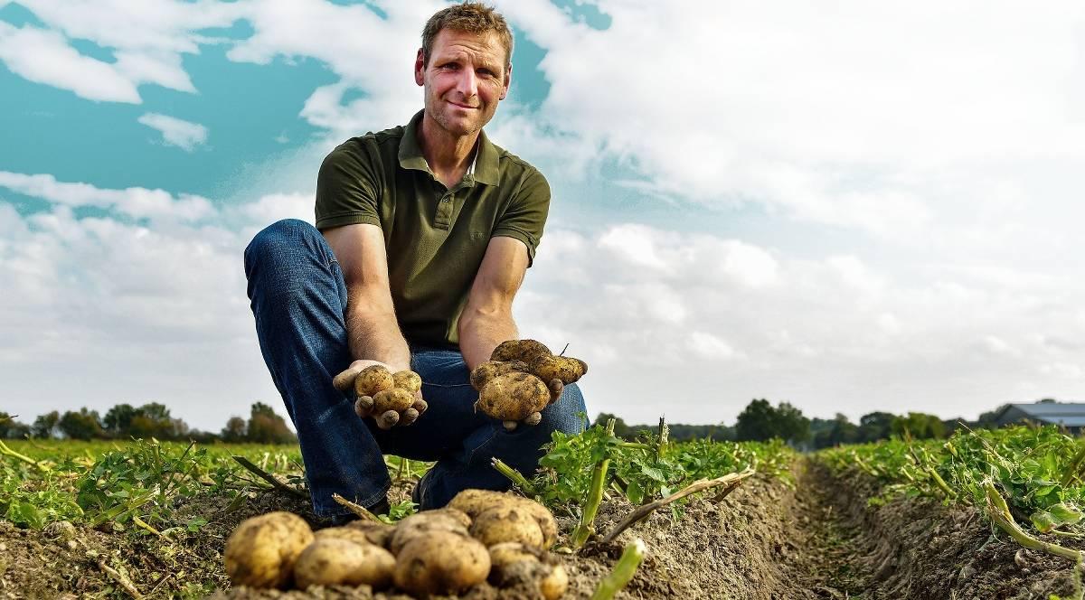 Potatoes must fall softly