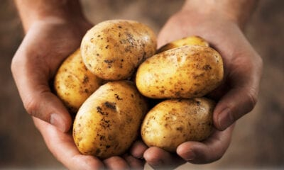 Potatoes reduce arable sales