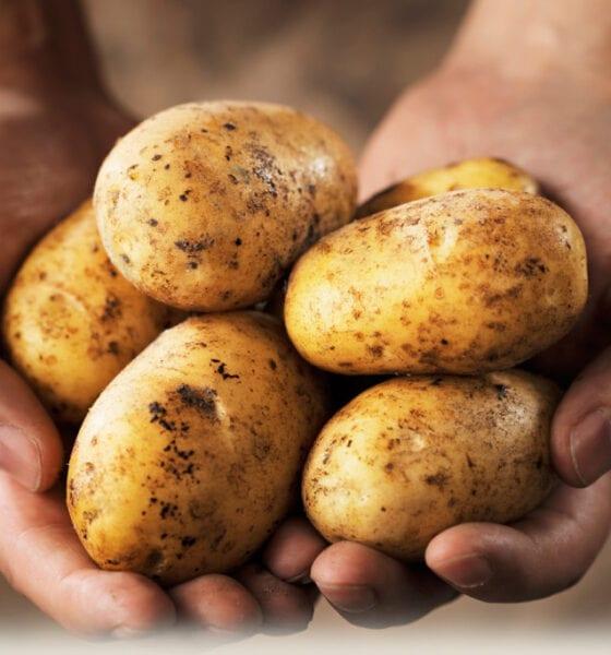 Potatoes reduce arable sales
