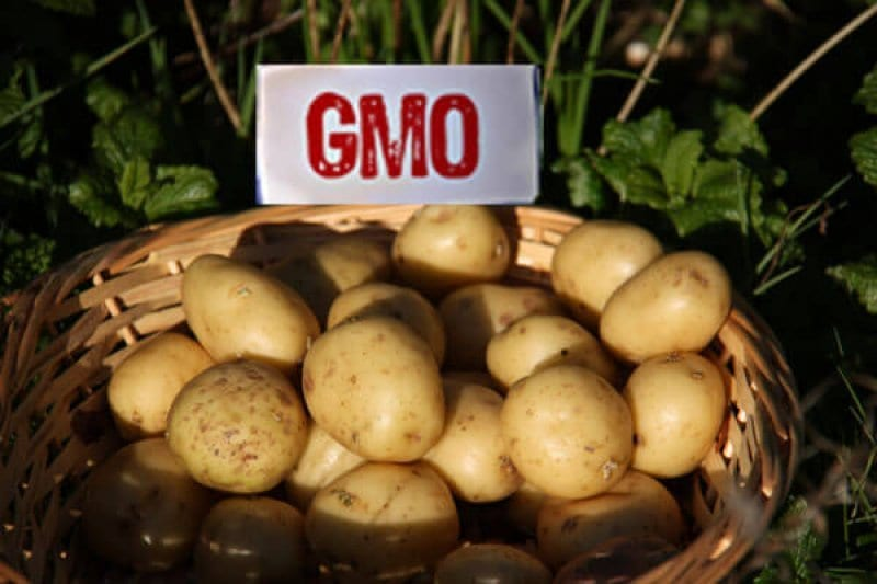 Viewpoint Theres no such thing as a 'GMO and the history of potatoes illustrates why the term is 'nonsensical