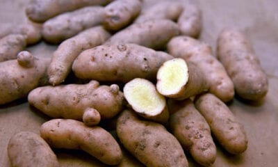 Visiting the potato cellar of the Karl family