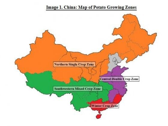 Chinas potato grown area will increase by 0.4 each year over the next decade