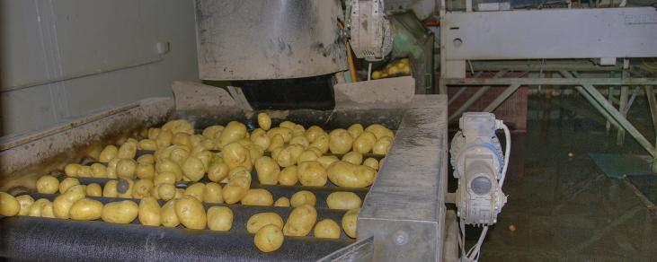 Kartoffel sortieren 10 ID42041 AF