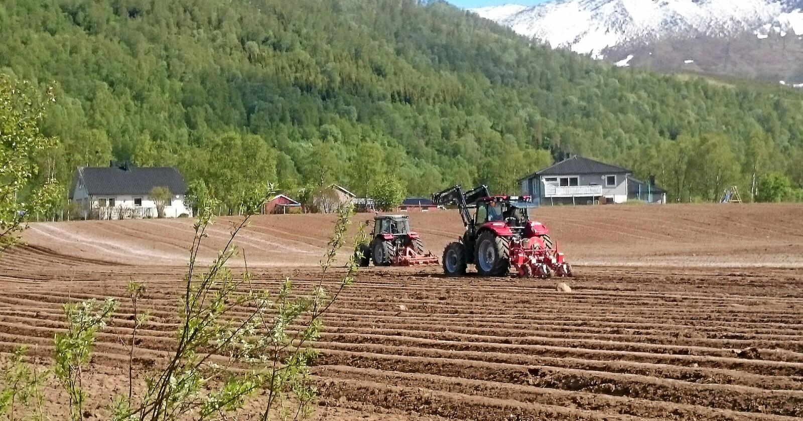 The northern Norwegian production of potatoes vegetables and berries is the northernmost in the world.