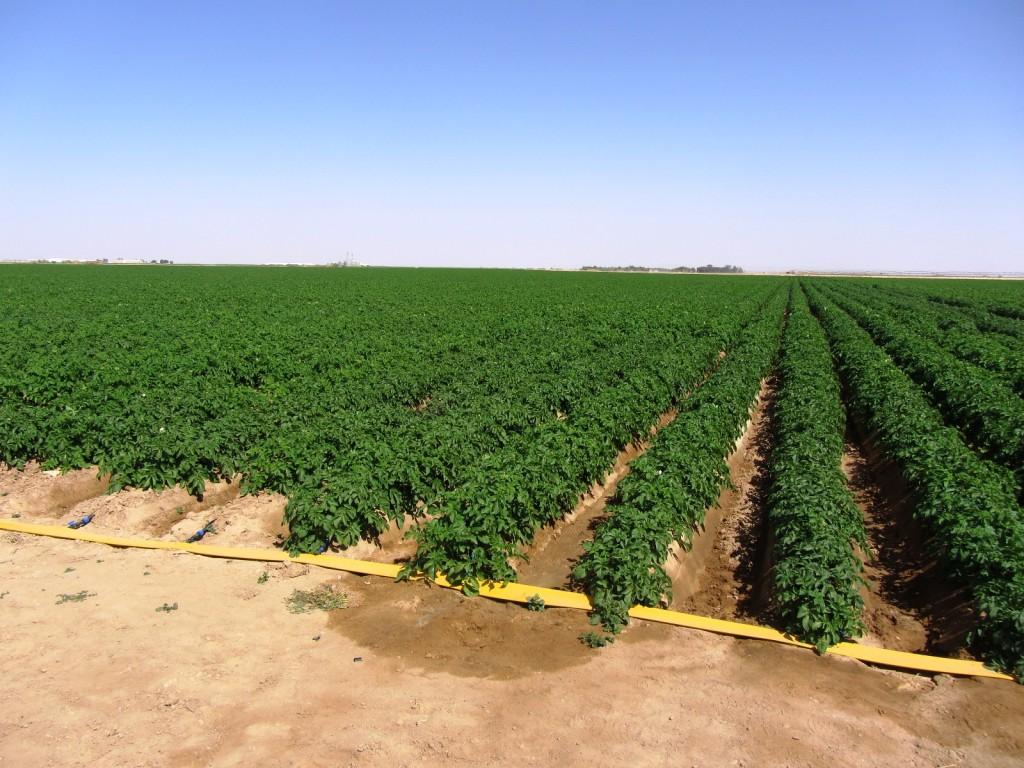 Irrigazione aerea