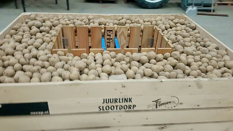 pre-sprouting system for potatoes
