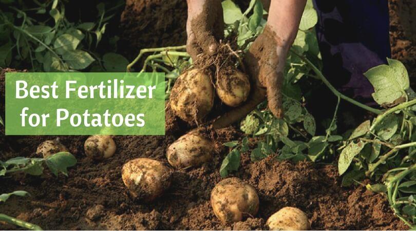 27.04best fertilizers for potatoes