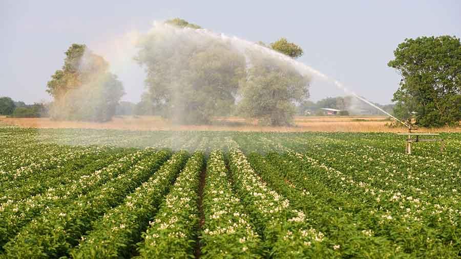 26.06 ري البطاطس