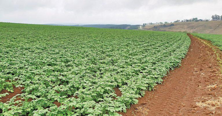 cultivo de patata 768x401 1